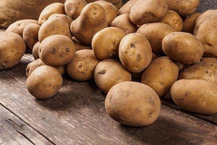 Стало відомо, що буде з цінами на картоплю через неврожай