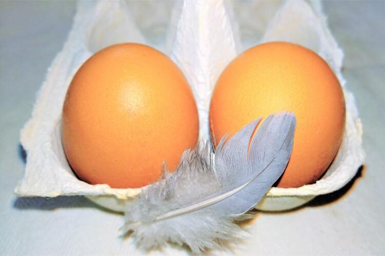 Судили студента, який кинув два яйця в будинок волинянина