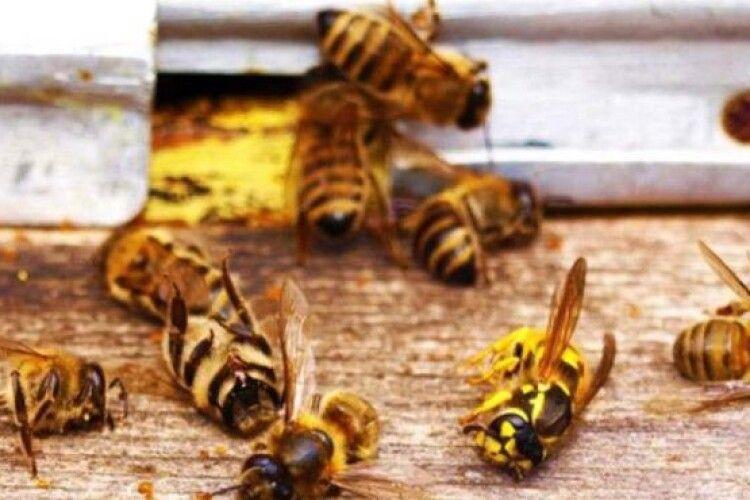 На Волині загинули понад 200 сімей бджіл