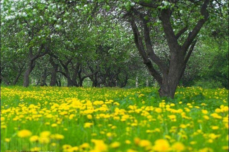 Погода на четвер, 6 травня: Юрій Весняний чарівними ключами відмикатиме землю