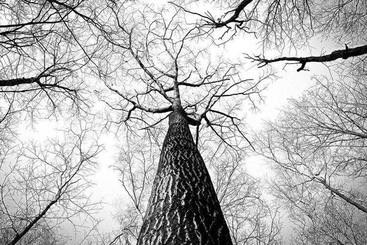 На Рівненщині на чоловіка впало дерево