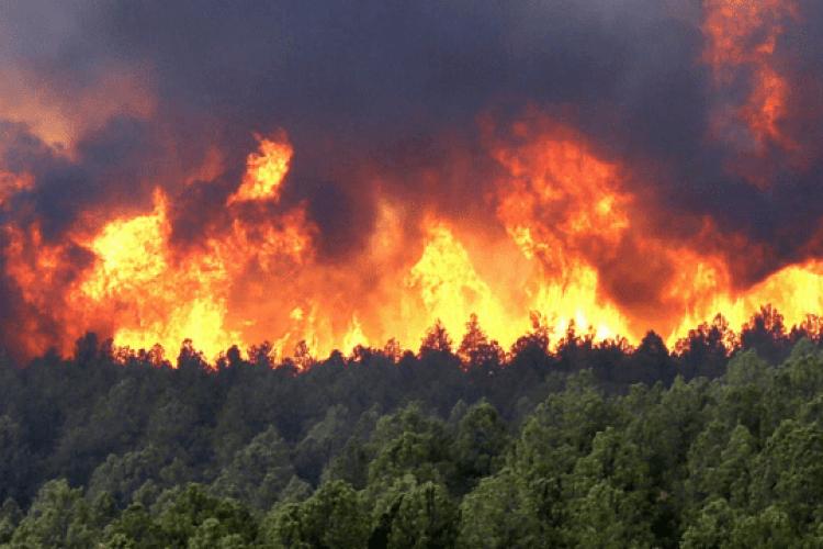 У Туреччині та Греції спалахнули нові лісові пожежі