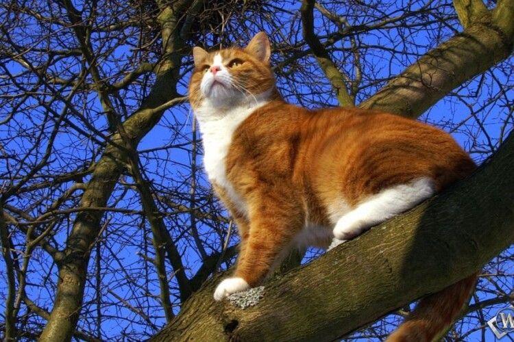 16-річний парубок поліз на дерево рятувати кота: хвостатий спустився сам, а ось хлопця довелося знімати бійцям ДСНС