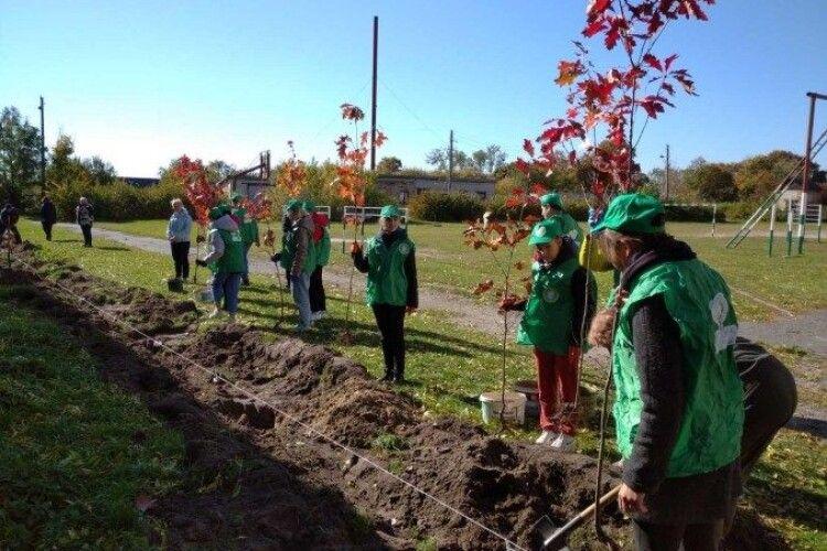 Із 4 мільйонів висаджених цієї осені в Україні дерев - половина на Волині