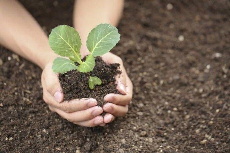 Погода на вівторок, 18 травня: під дощиком якраз добре садити капусту