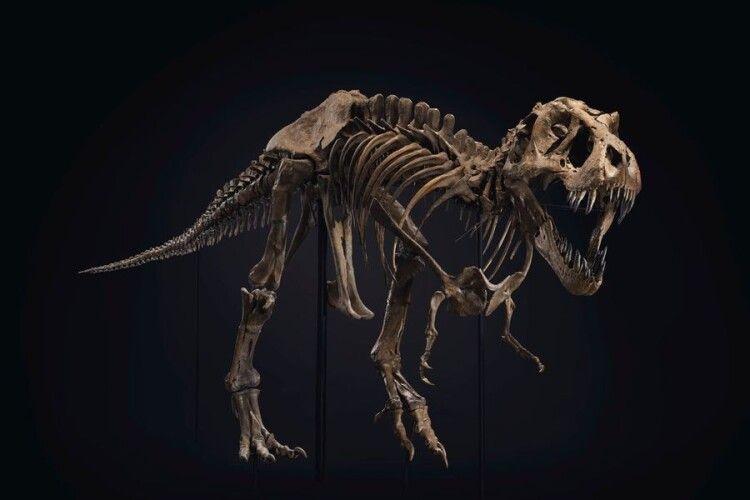 За скелет тиранозавтра хочуть від 6 до 8 мільйонів доларів