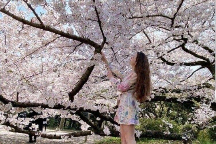 Лучанка, яка живе в Японії, показала, як цвітуть в Токіо сакури (Фото)