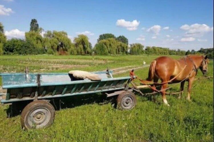 На Ківерцівщині в жінки вкрали воза з конем: грабіжника посадили на 4 роки