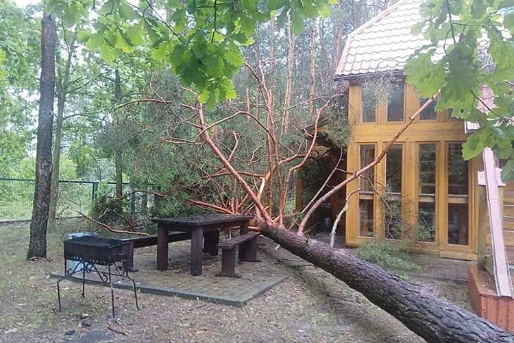 Вітер був такої сили,щовиривав дерева зкорінням (Відео)