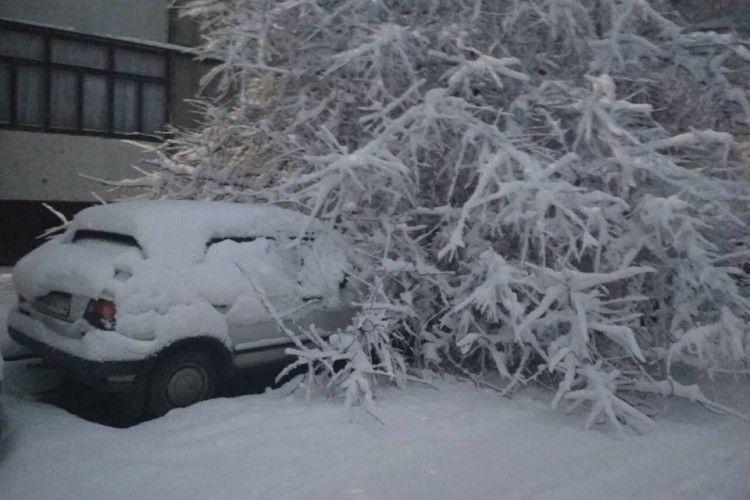 У Рівному десятки дерев не витримали ваги снігу