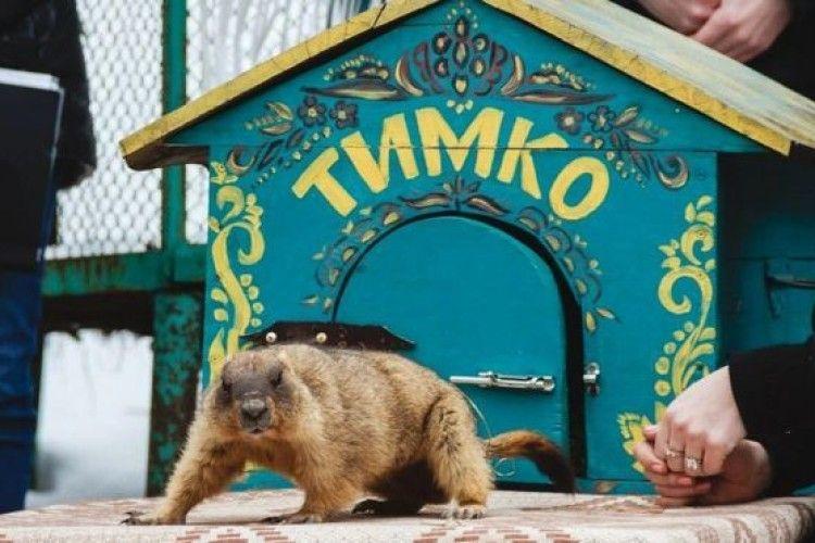 Бабак Тимко побачив свою тінь і сховався