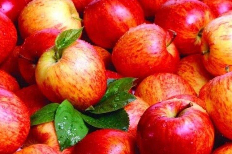 Ціни на українські яблука знизились у півтора рази