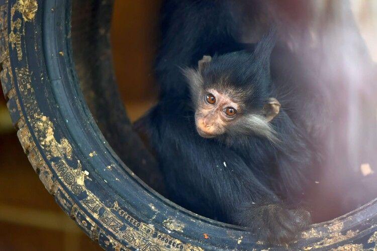 «Завтра ти тут не працюєш»: як гості луцького зоопарку погрожують працівникам