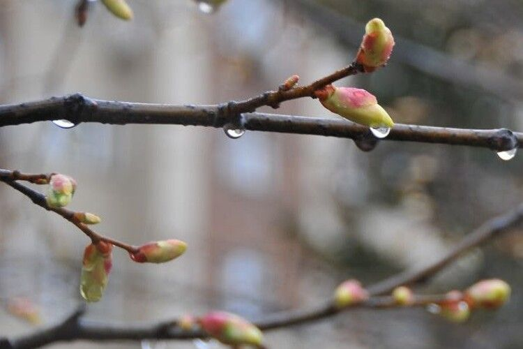 Погода на четвер, 15 квітня: на Волині йтиме дощ, а часом – ще й з мокрим снігом