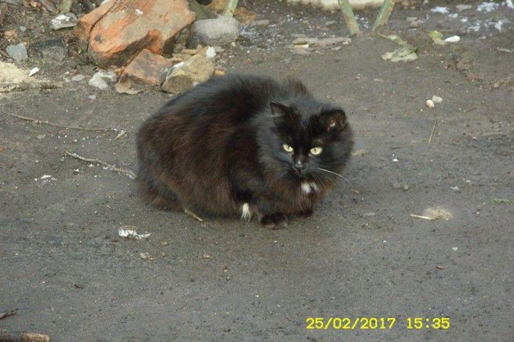 В центрі Луцька два місяці сидить чорна кішка і чекає на господарів (фото)