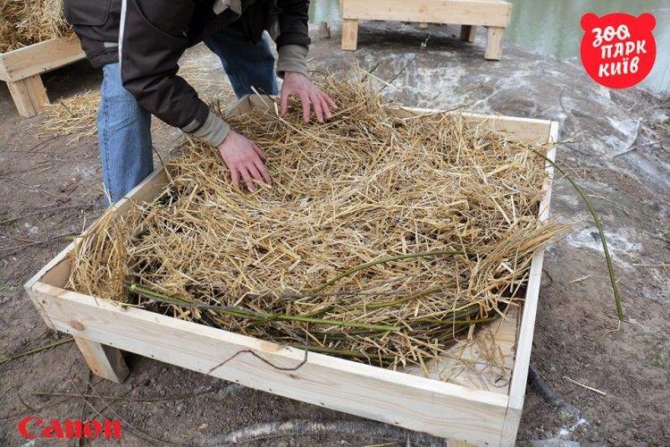 Працівники зоопарку власноруч мостять гнізда для столичних пеліканів (фото)