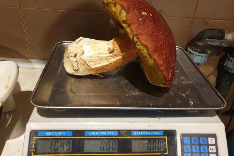 Волинянин знайшов під Маневичами гігантського грибацюру (Фото)