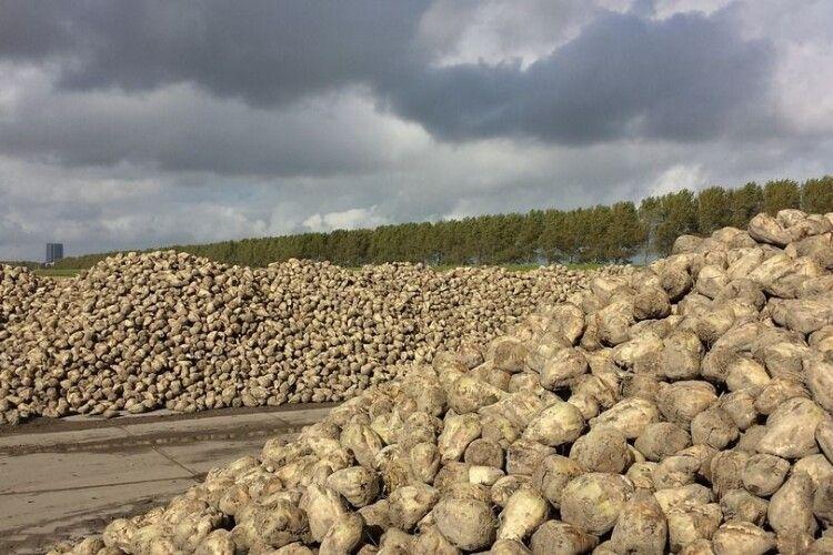 «Гнідавський цукровий завод» готовий переробляти усі цукрові буряки Волині та межуючих областей