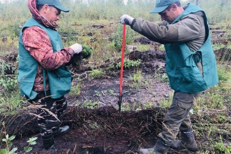 Лісівники Волині висадили перший мільйон майбутніх дерев