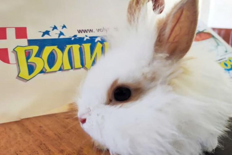 Волинського редакційного кроля пропонують назвати Зе Порох (Відео)