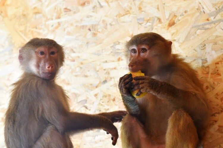 У Луцькому зоопарку – новачки. Лучан кличуть знайомитися з Сонею та Дюком (Фото)