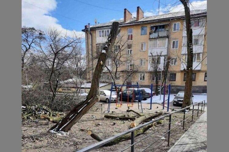 У Луцьку дерева обрізали самовільно (Фото)