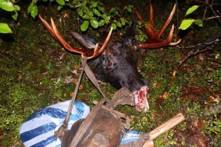 Убивство лосів – на контролі прокуратури