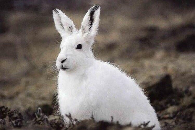 Погода на четвер, 4 березня: зустрінете білого зайця – готуйтеся до нових снігопадів