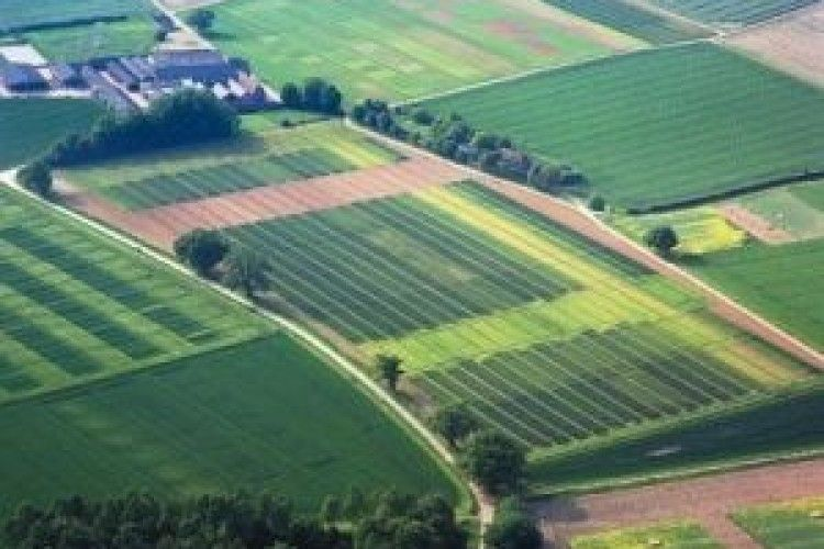 На Волині у підприємства забрали особливо цінні землі вартістю 245 мільйонів гривень