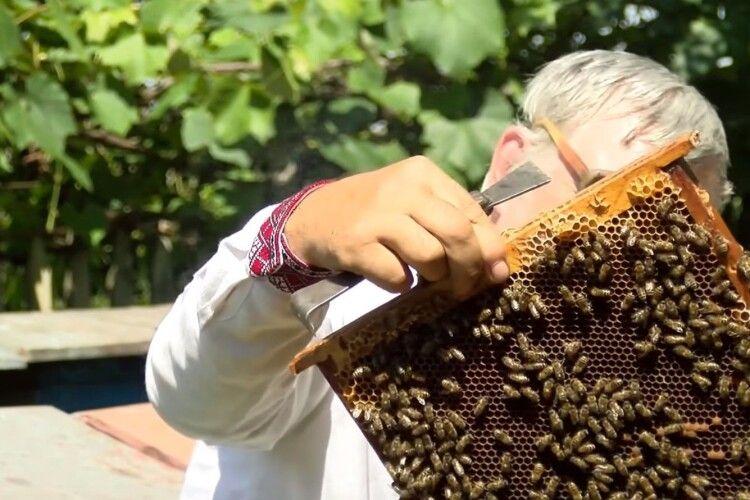 На Волині бджолярів попередили про обробку полів