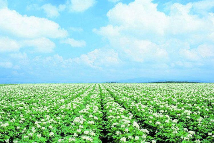 Агротехніка— теж панацея