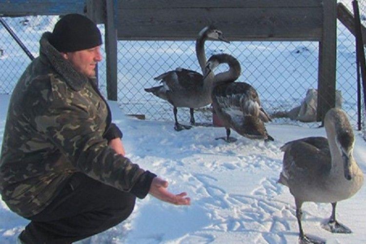На Ратнівщині священик врятував лебедів