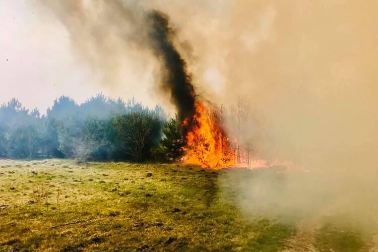 Пожежу на Волині гасили волонтери, лісівники, посадовці та рятувальники (Відео)