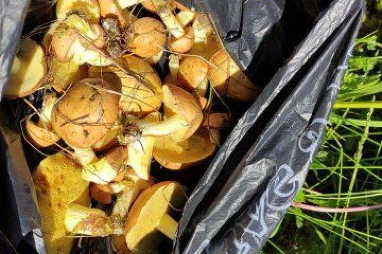 Волиняни вже збирають перші гриби