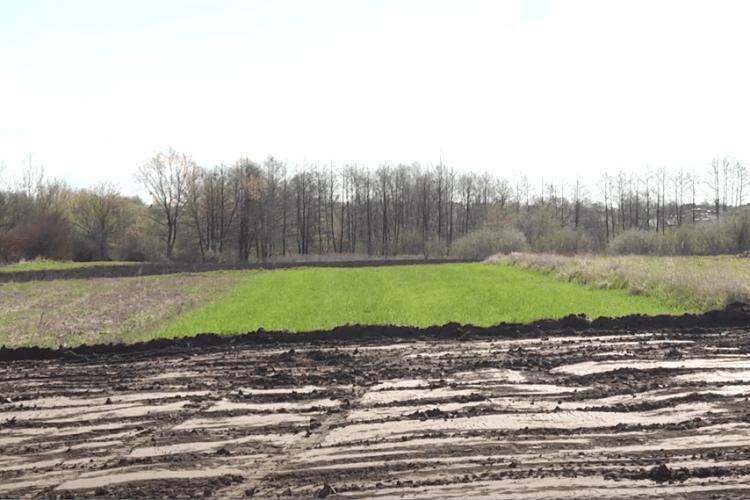 Під Луцьком засіяні городи селян бульдозер зрівняв із землею (Відео)