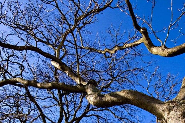Круасан на дереві кілька днів тримав у страху жителів міста (Фото)