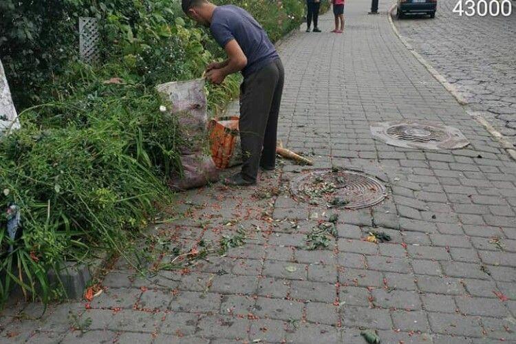 У Луцьку зловили «заготівельників», які обривали горобину разом з гілками (Фото)