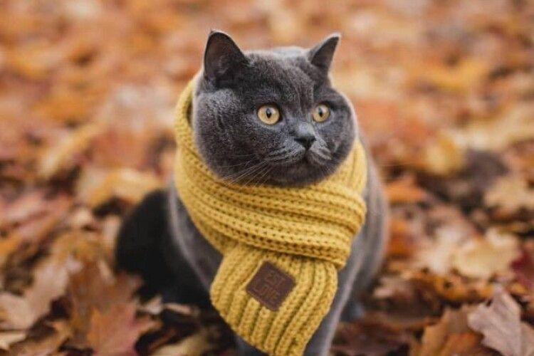 Погода на середу, 20 листопада: на Волинь невблаганно насувається похолодання