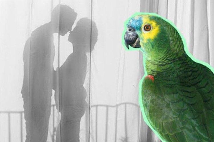 Сімейне життя зруйнував... папуга