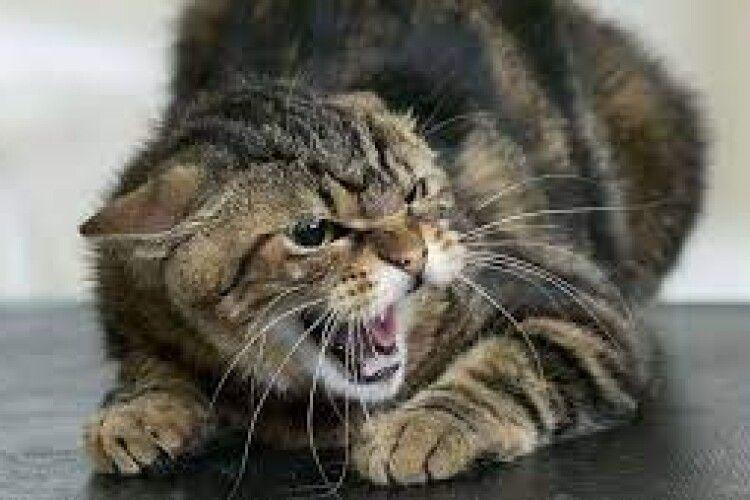 Через скаженого кота карантин запровадили на території 11 сіл
