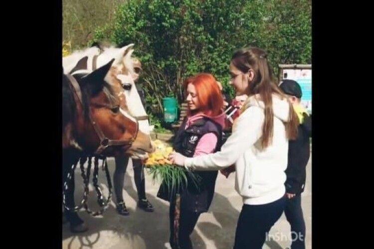 Рівненська кобила Маша відсвяткувала 31-річчя: гості бажали їй міцного здоров'я та смачної моркви (Відео)