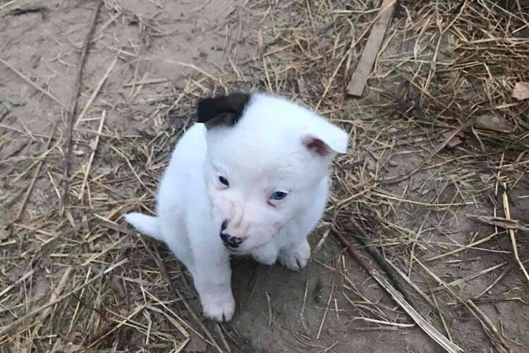 Під Луцьком мріє про собаче щастя біле цуценя з чорним вухом (Фото)