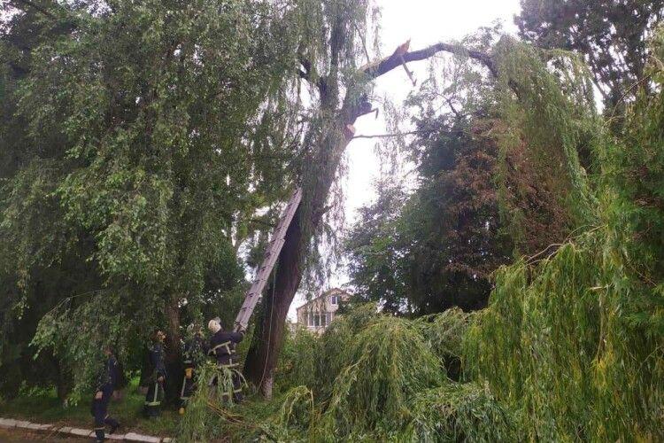 Через негоду дерево ледь не розтрощило котельню (Фото)