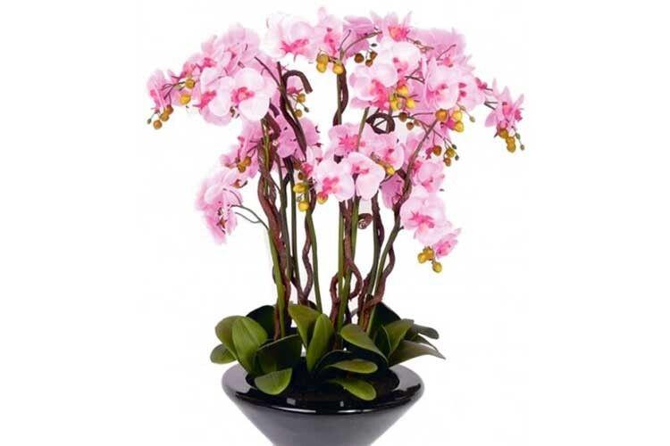 Ох вже ця орхідея!