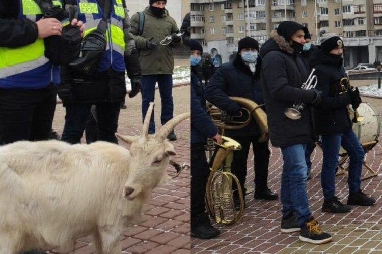 Як біля Волинської ОДА коза на прив'язі протестувала (Відео)