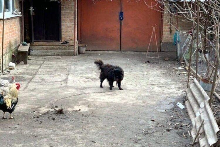 Розшукали «елітного собаку», якого пенсіонерці радив продати скандальний депутат Брагар (фото)