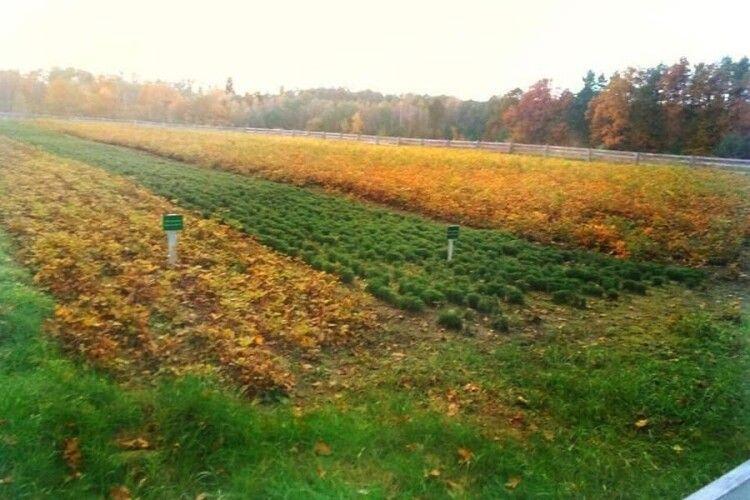 На Ківерцівщині висадили 154 га лісу
