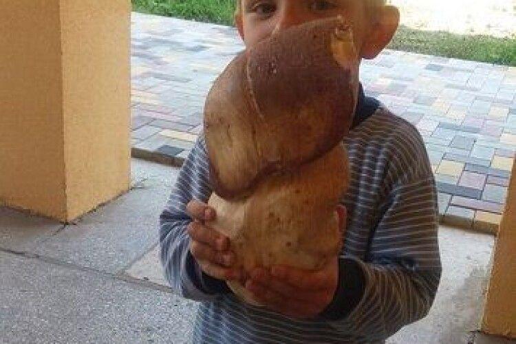Волинянин знайшов білого гриба-гіганта вагою майже в кілограм (фотофакт)