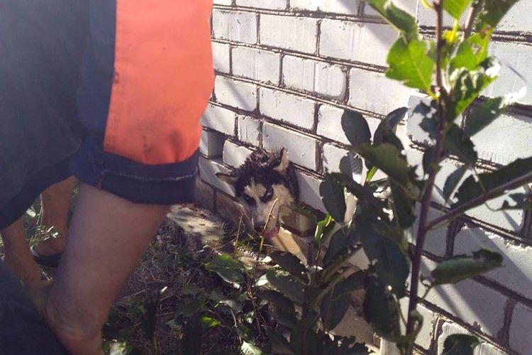 Бійці ДСНС врятували цуценя Білку, яке застрягло головою в паркані