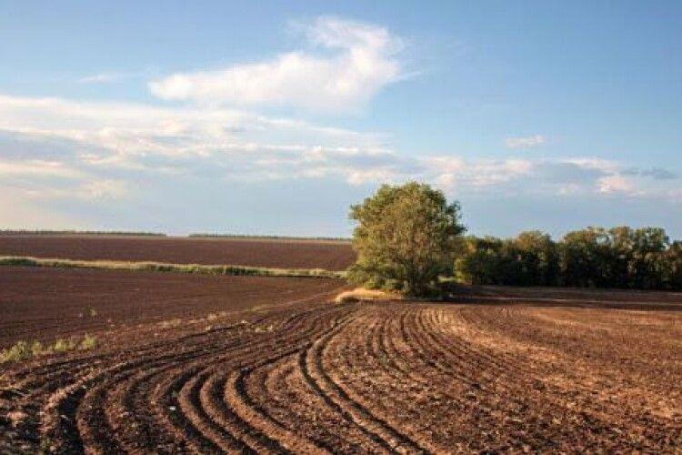 На Волині у фермерського господарства забрали 13 гектарів землі